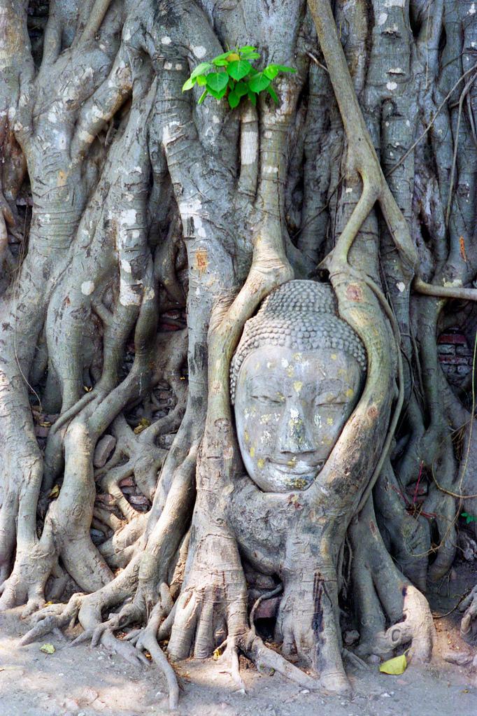 Stone head in Ayutthaya outside Bangkok