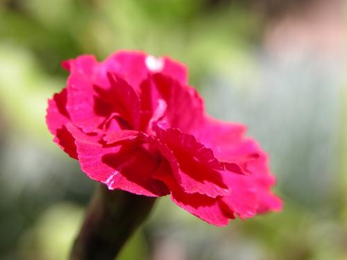 Flower, left