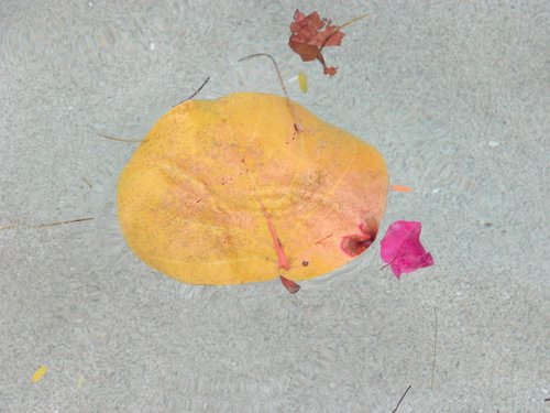 Still Life with Leaves and Flowers