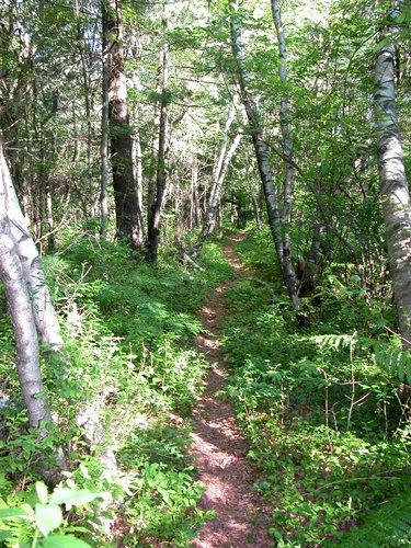 Robert Frost Trail