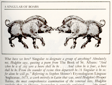 A singular of boars…in italics???
