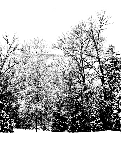 Front Yard in Black & White