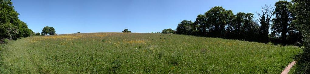 Field Panorama
