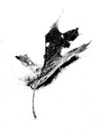Leaves in snow (iii)