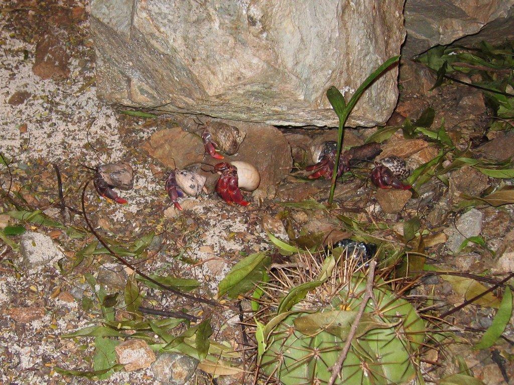 Hermit crab army?