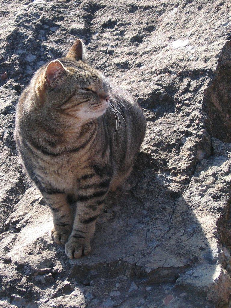 The cats of Mandelieu II
