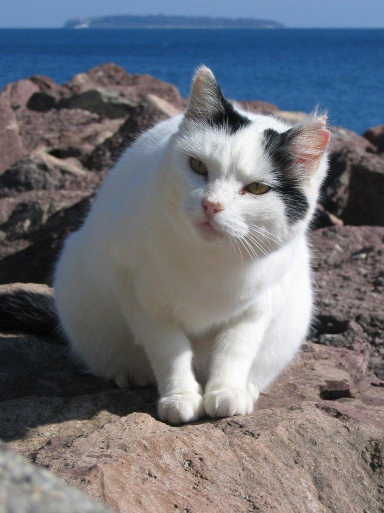 The cats of Mandelieu III