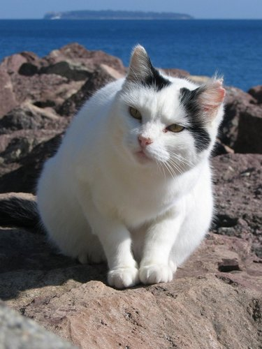 The cats of Mandelieu III