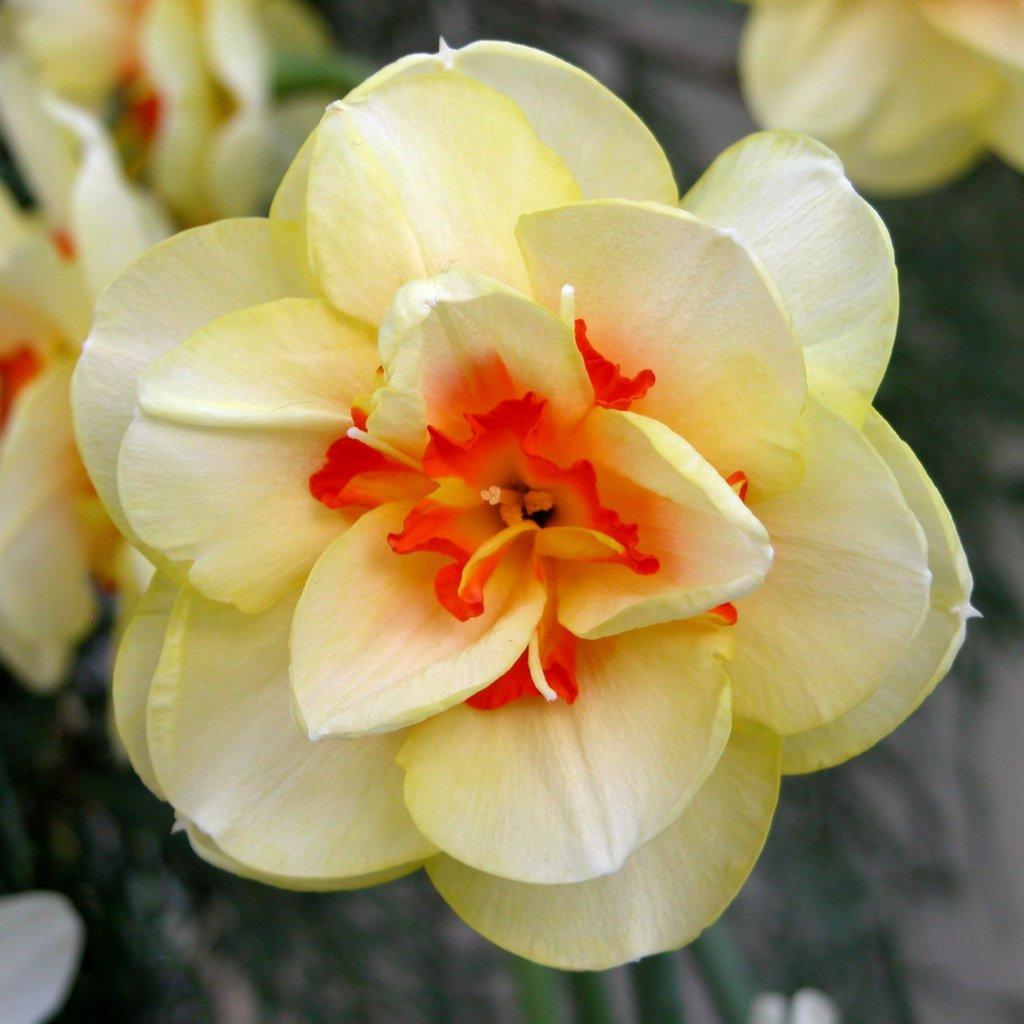 Smith College Spring Bulb Show (xxii)