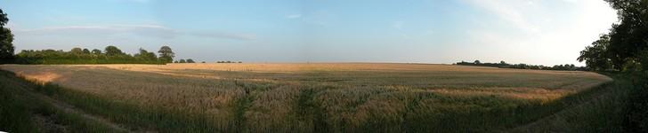 Erpingham field