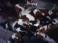 Yet more puppies