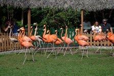 Trained flamingos
