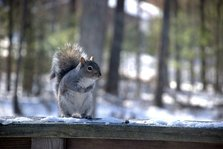 Squirrel on the deck