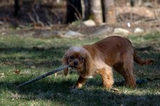 Becket finds a stick