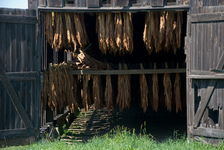 Drying tobacco