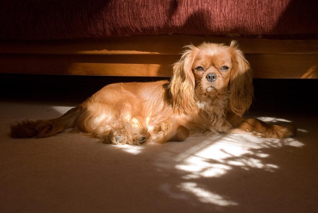 Puppy in the sun