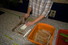 Flattening papyrus