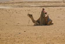 A man and his camel