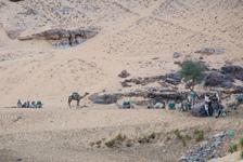 Camel caravan?