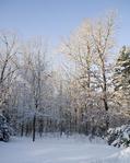 Snow in the sun
