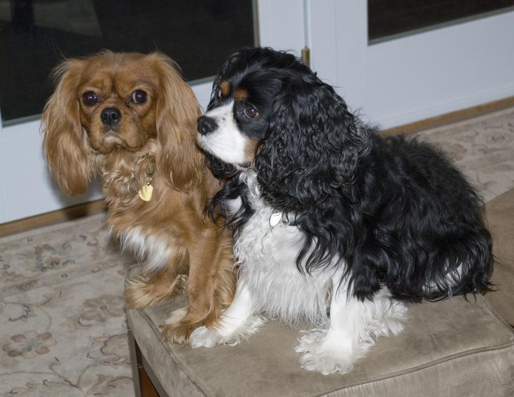 Ralphie and Becket