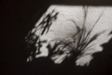 Shadow plants