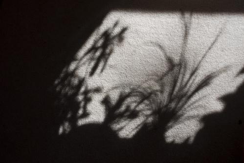 Shadow plants