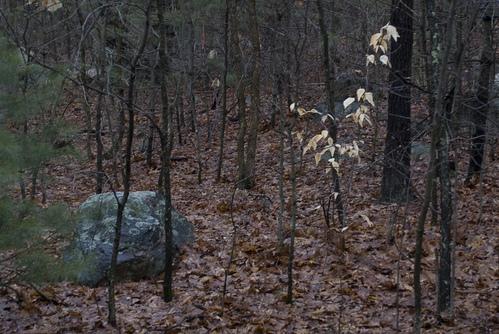 White leaves