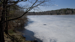 Spring comes to Leverett Pond
