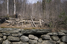 Rock wall, beaver dam, pond, beaver lodge