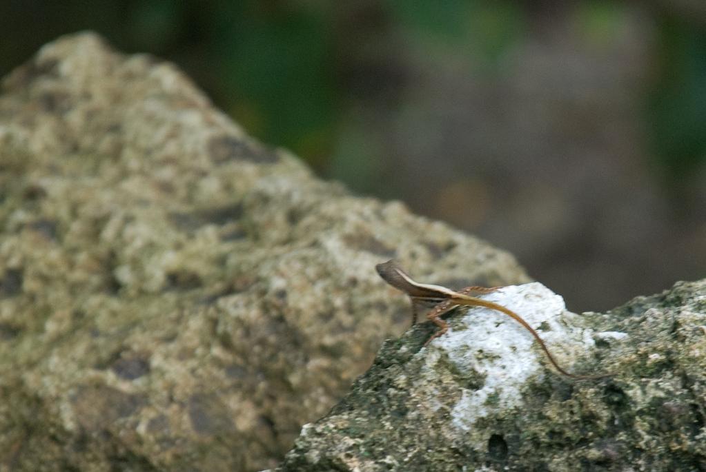 Blurry lizard