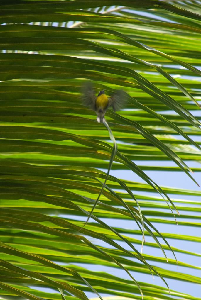Little yellow bird flying away