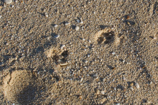 Mongoose tracks, I assume