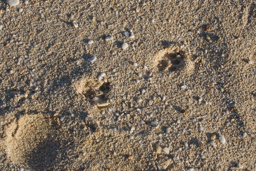 Mongoose tracks, I assume