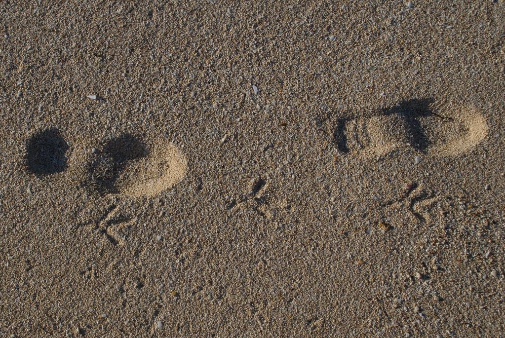 Bird and people tracks