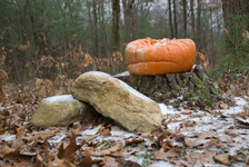 Frowning pumpkin