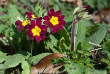 Erpingham flowers