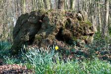 Toad tree stump?