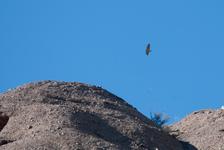 Vulture?