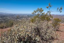 Mountain top shrubs
