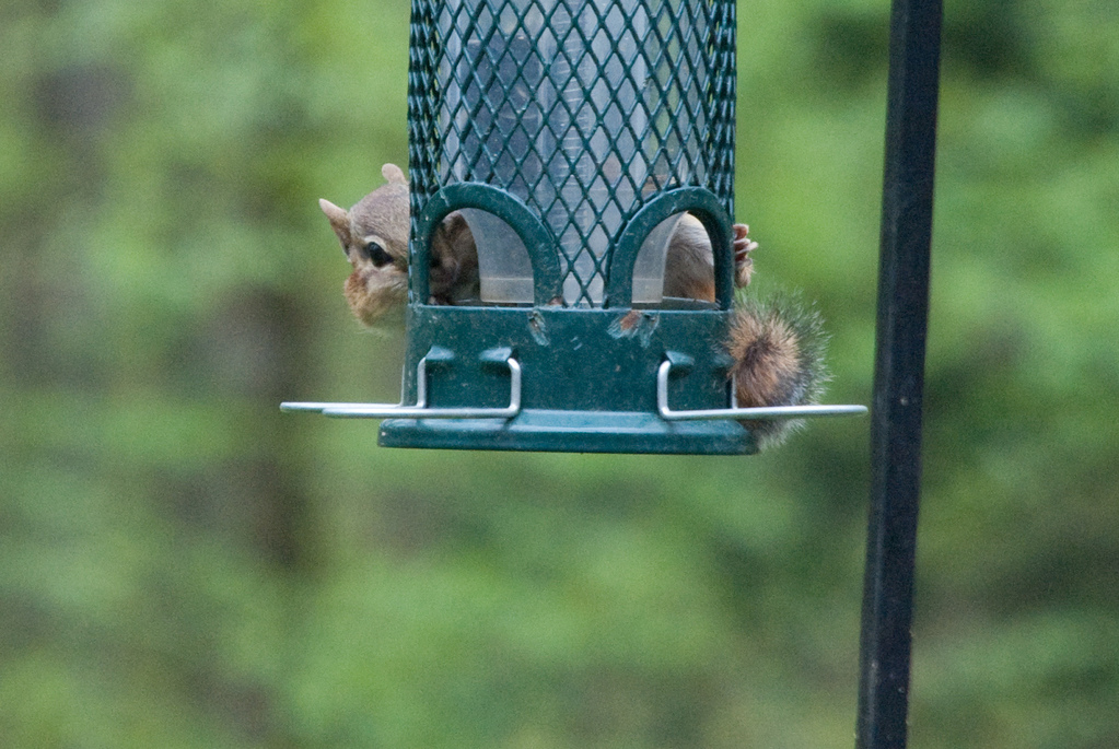 """What is this \""""squirrel proof\"""" of which you speak?"""