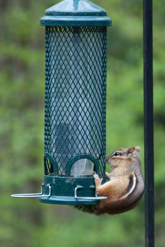 "What is this ""squirrel proof\"" of which you speak?"