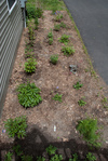 New flower bed from above