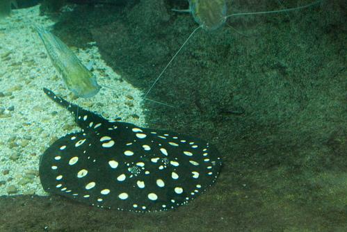 Aquarium of the Americas