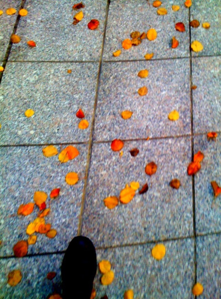 Boston leaves