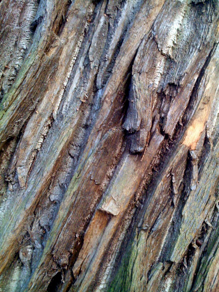 Patterns in bark