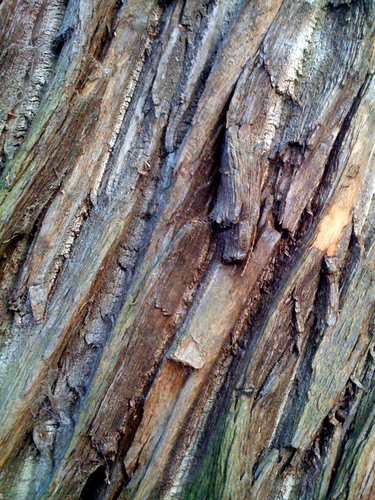 Patterns in bark