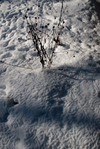 Bird tracks on snow