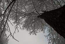 February snowfall