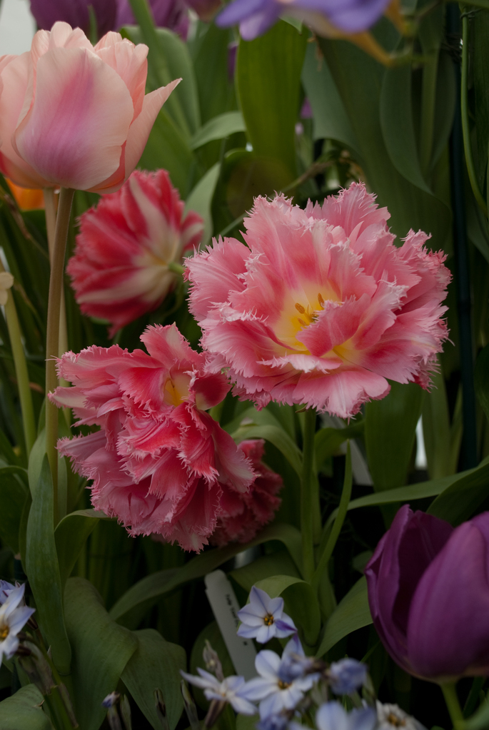 Smith College Bulb Show